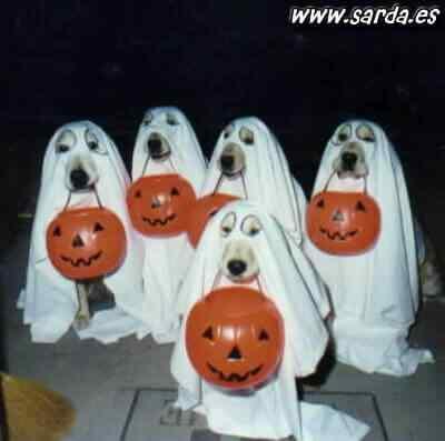 Disfraces-de-halloween-para-perros-10