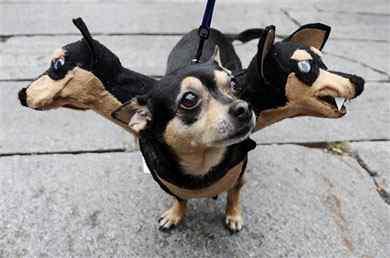 Disfraces-de-halloween-para-perros-12