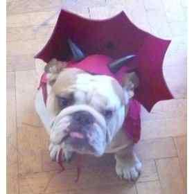 Disfraces-de-halloween-para-perros-15