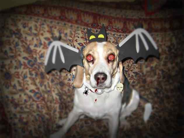 Disfraces-de-halloween-para-perros-5