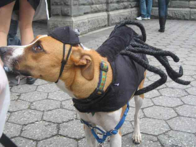 Disfraces-de-halloween-para-perros-6