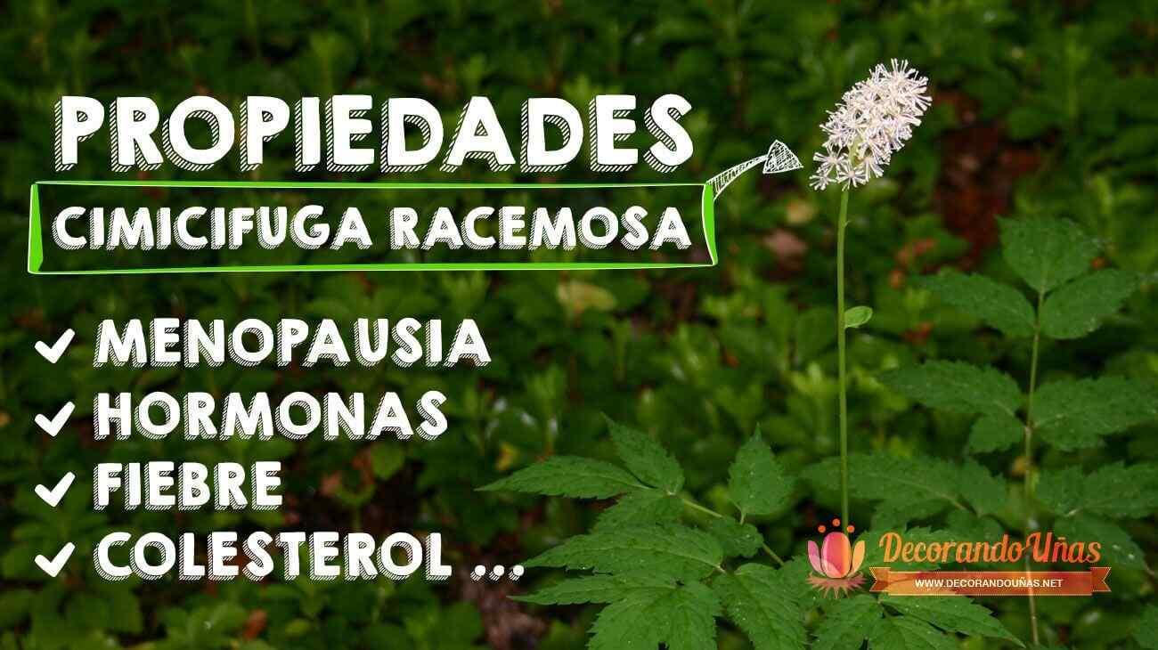 Cimicifuga_racemosa_propiedades