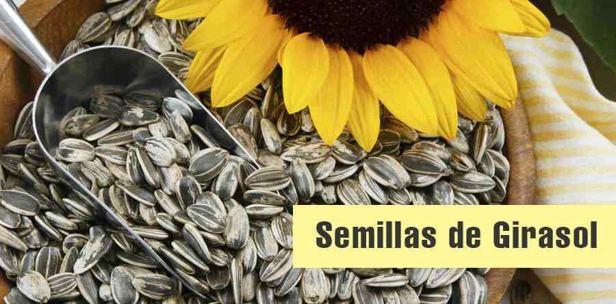 semilla-de-girasol-propiedades