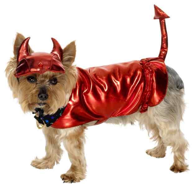 Disfraces-de-halloween-para-perros-1