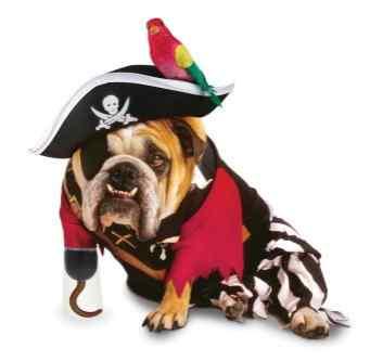 Disfraces-de-halloween-para-perros-13
