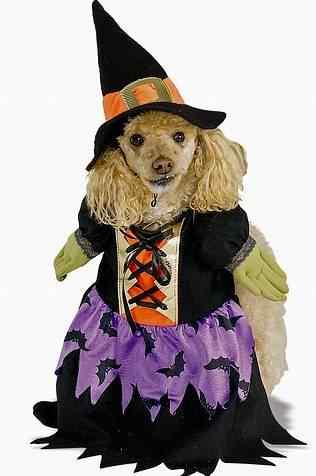 Disfraces-de-halloween-para-perros-14
