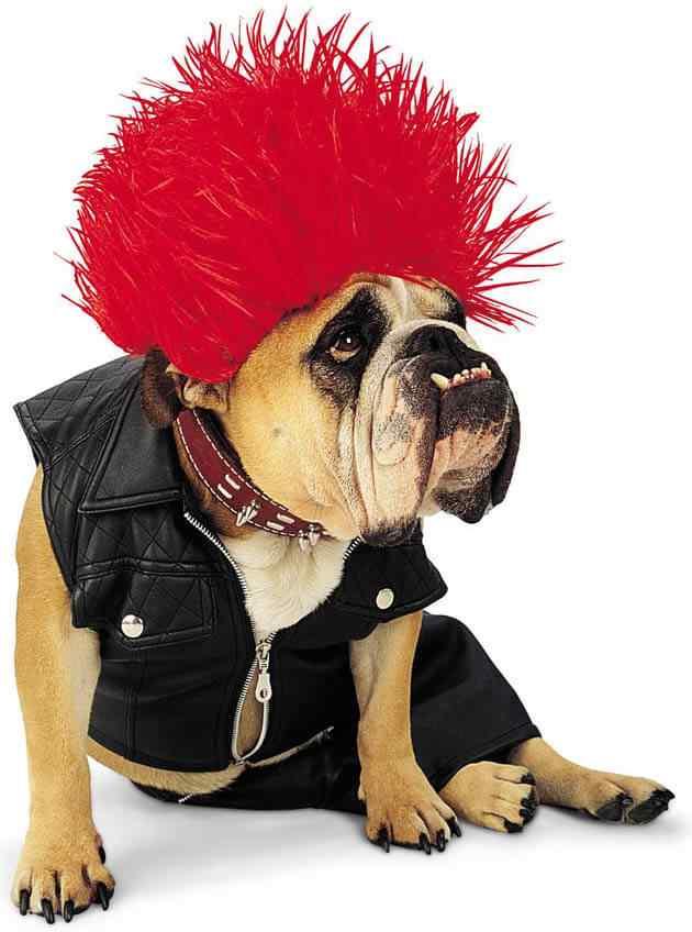 Disfraces-de-halloween-para-perros-2
