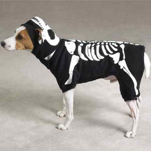 Disfraces-de-halloween-para-perros-7
