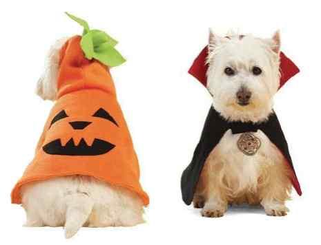 Disfraces-de-halloween-para-perros-8