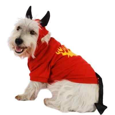 Disfraces-de-halloween-para-perros-9