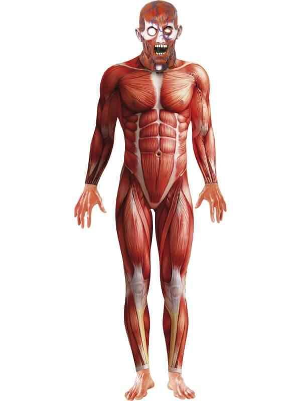 anatmia humana